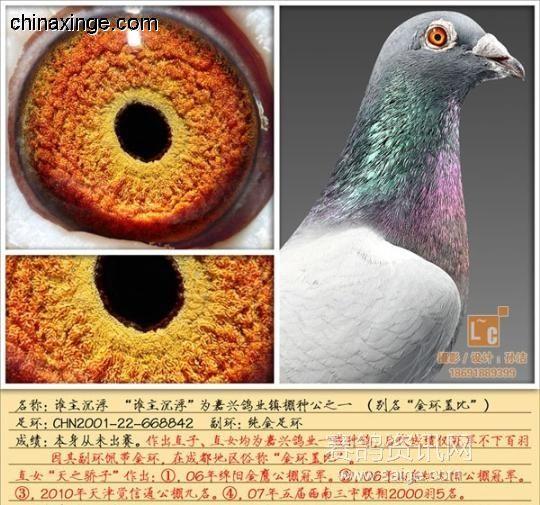 骨架容易改造,眼睛级别很难改,低级别的眼睛,很难做出高级别的眼