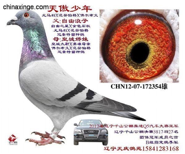 近亲培育新种鸽收获成功(图)